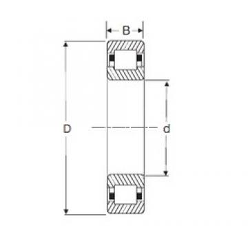 55 mm x 120 mm x 29 mm  SIGMA NUP 311 cylindrical roller bearings
