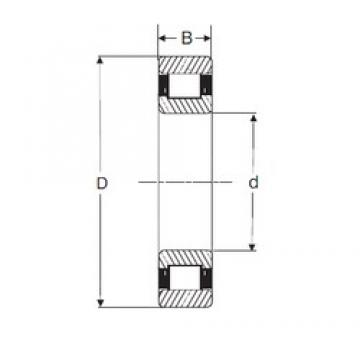 55 mm x 120 mm x 29 mm  SIGMA N 311 cylindrical roller bearings